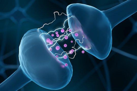 Chất dẫn truyền thần kinh có vai trò thế nào với cơ thể người?