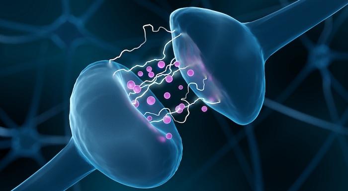 Chất dẫn truyền thần kinh có vai trò thế nào với cơ thể người? 1